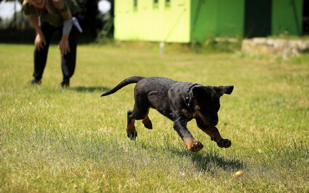 Mieux comprendre la détection canine